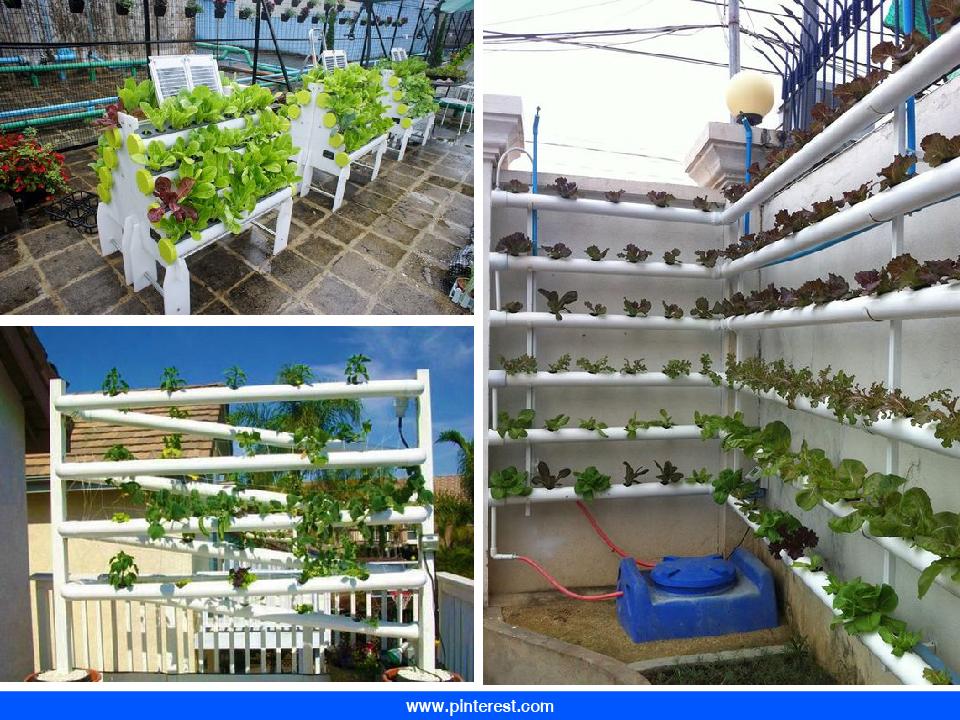 Rooftop Farming เทรนด์มาแรงที่ช่วยโลก แถมช่วยให้มีรายได้เพิ่มอีกด้วย